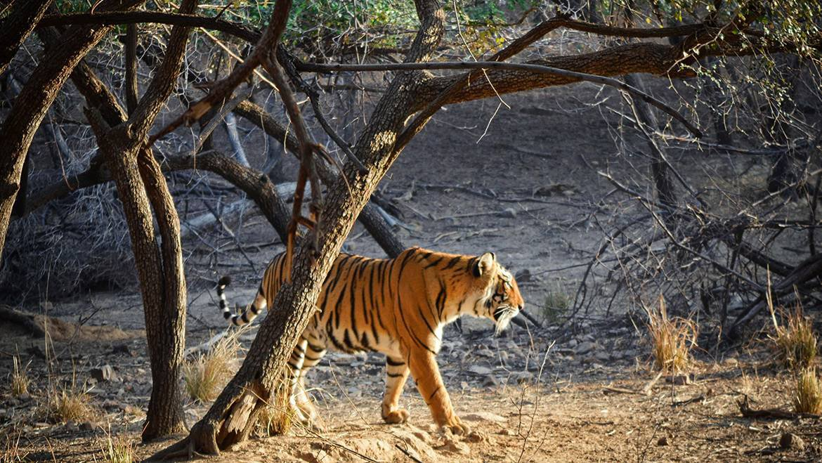 What to expect from Ranthambore National Park, Rajasthan