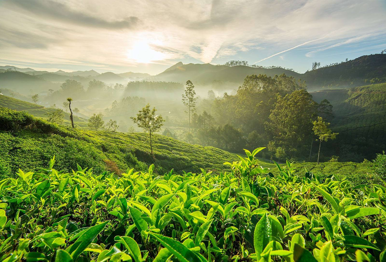 The Offbeat side of Mystical Munnar