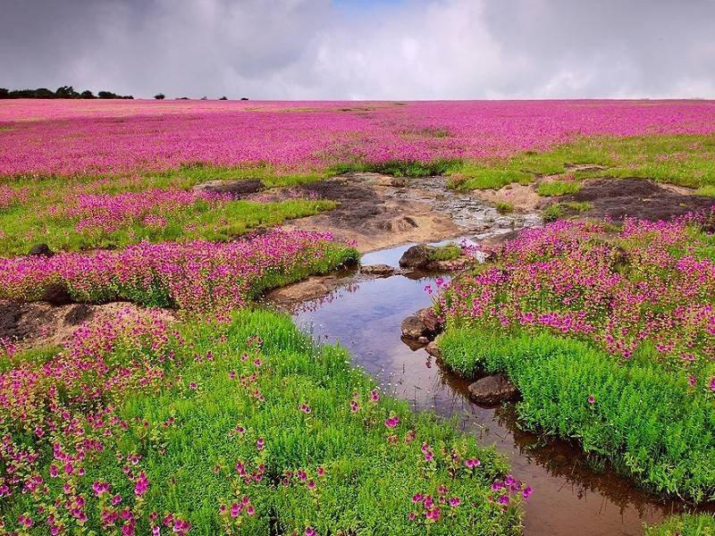 A Different Kaas Plateau - Photo Essay of Landscapes from surroundings!