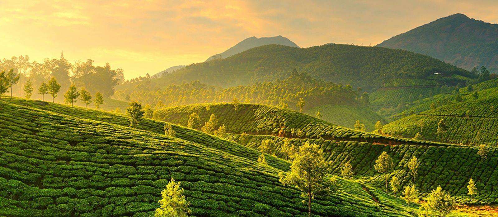 Prime Munnar Holiday Package
