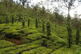 ENJOY NATURE AT VAGAMON