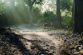 Jim Corbett Holiday Package
