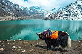 Mesmerizing Magical Sikkim (Summer) Tour