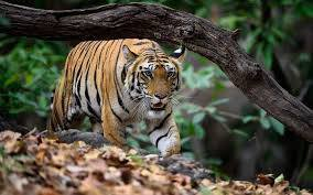 Most Beautiful Bandhavgarh Tourist Places