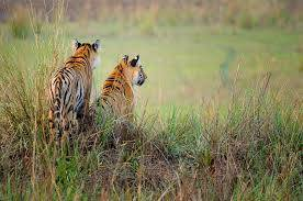 Tadoba Tiger Reserve Safari Tour