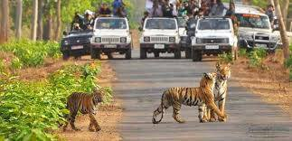 Tadoba Wild Life Tour Package
